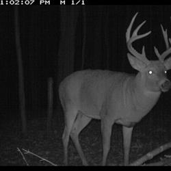 Click to view album:  BWB Trail Cam Pictures
