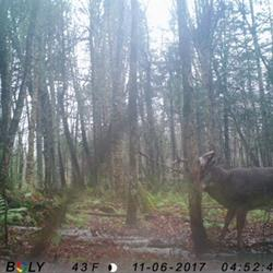 Click to view album:  BWB Trail Cam Photo's